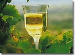 Как дегустировать вино? Часть 2
