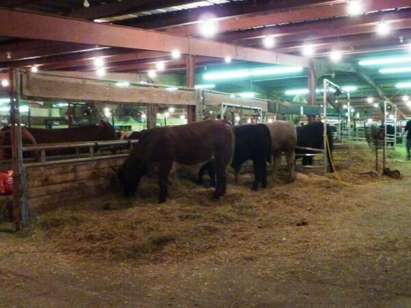 Павильон с коровами в пятницу почти опустел