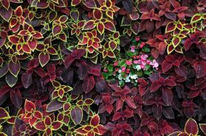 Как создать домашний мини-сад из комнатных растений?
