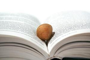 Чем опасны школьные учебники? Убойная сила слова