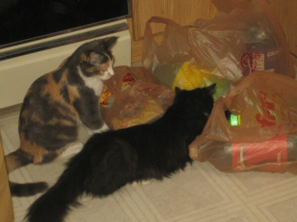 Соня обучает Такса искусству упаковки в пластиковый пакет