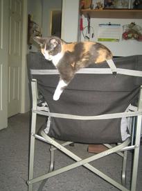 Высший пилотаж: Соня балансирует на складном стуле