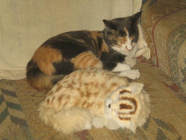 Соня и подружка Нюшка. Вместе спать веселее
