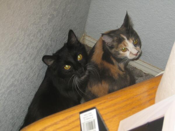 После очередной «шкоды» оба кота спрятались в самый дальний угол