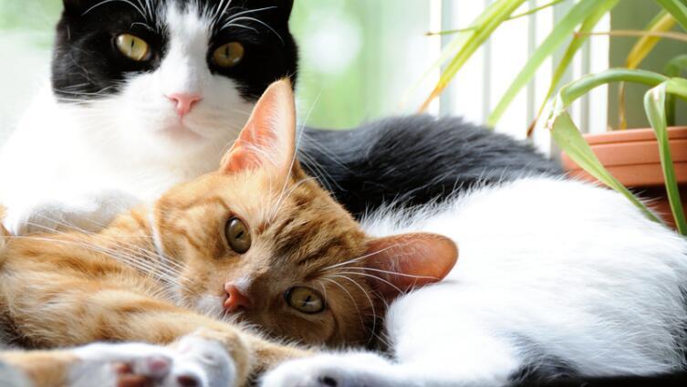 Коты стали взрослыми. Что изменилось в их поведении и привычках?