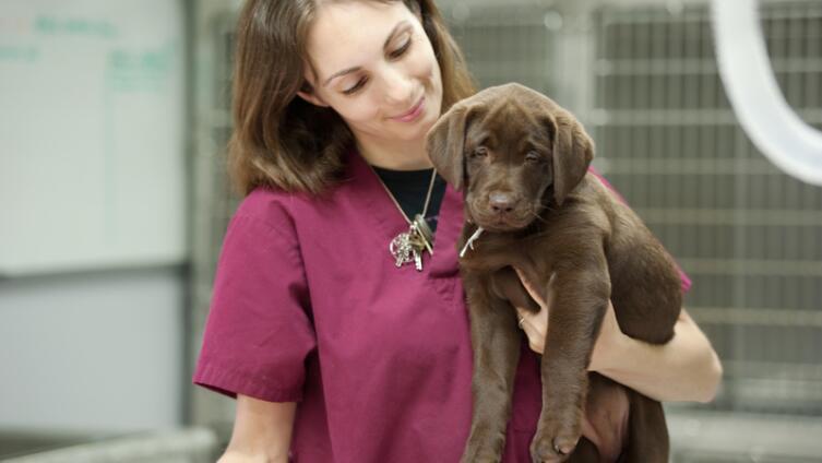Вакцинация домашних животных. Прививать или не прививать?
