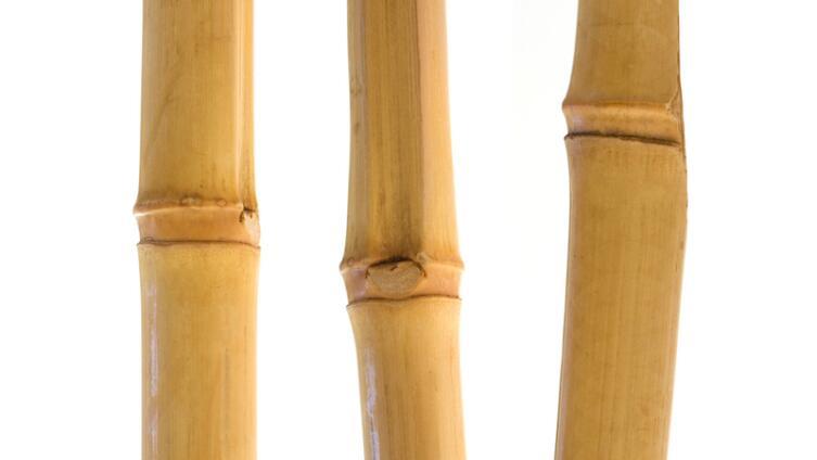О мир бетона, пластика и стали... Когда вы о бамбуке вспоминали?