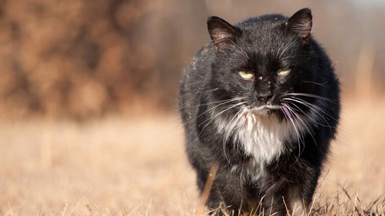Бывают ли коты-романтики?