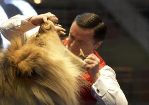 Как дрессируют тигров и львов?