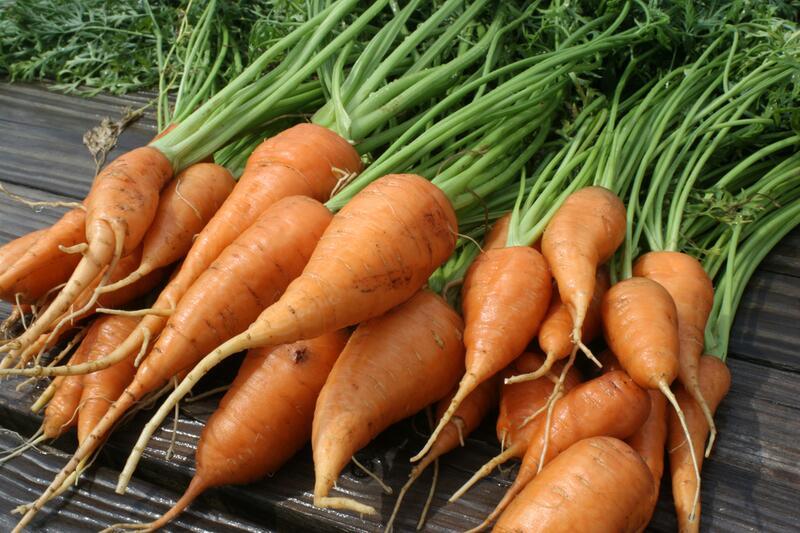 Как вырастить морковку здоровой, красивой, сочной и вкусной? Практические советы