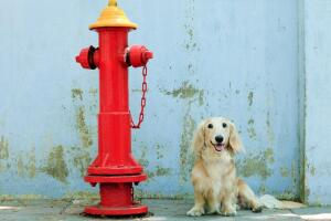 Легко ли жить на свете собакам-веганам? Мысли таксы