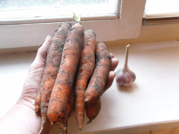 Экологически чистая морковка