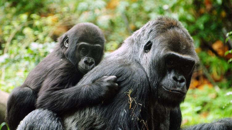 Человек - «тупая обезьяна» или «высшее создание»?