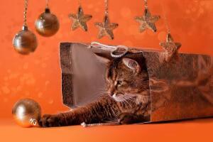 Дед  Мороз, Апельсин и Тигр. Почему тоскует сын?