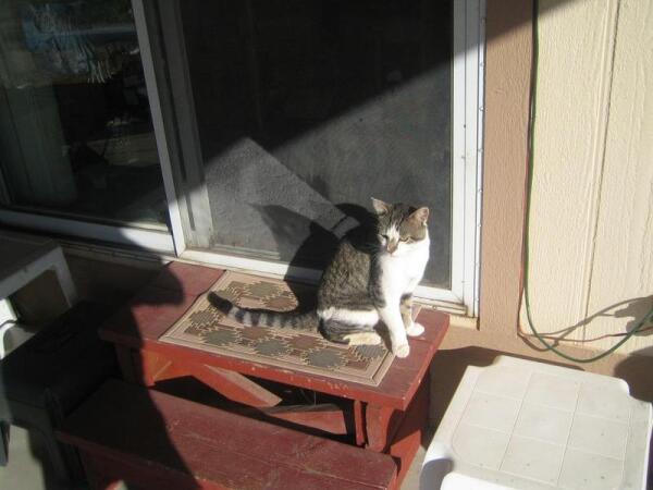 Последний раз мы видели Френдли на пороге нашего дома в феврале 2010 г.