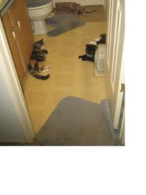 Коты славно потрудились, безобразничая в моей ванной