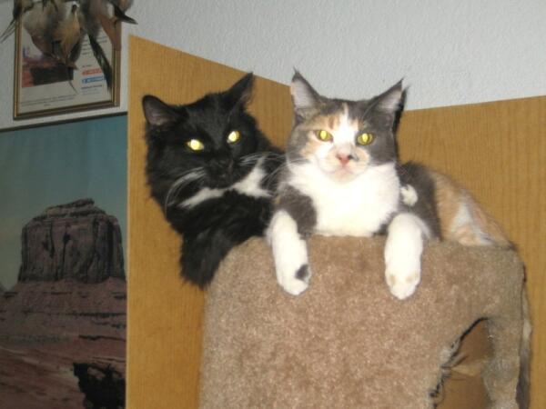 Новые члены нашей семьи: Такс и Соня. Они всегда вместе