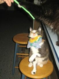Коты любят играть с соломкой для питья