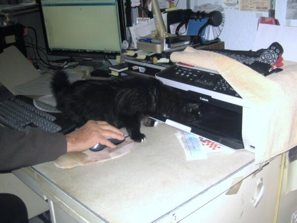 Такс ремонтирует принтер