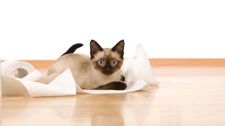 Как без насилия приучить кошку к горшку? Учимся жить вместе
