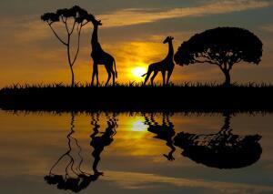С чего начинается «Африка»? Конечно же, с красивых цветовых сочетаний!