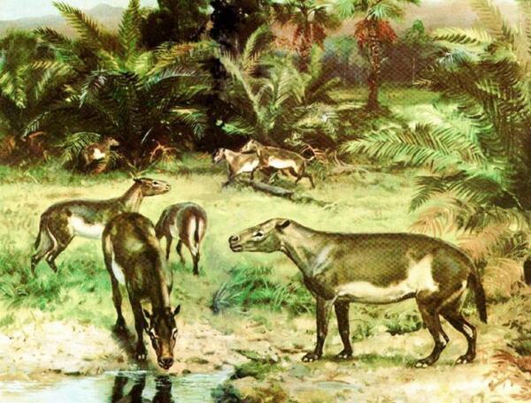 Гирахиус— весьма невнушительный предок носорога