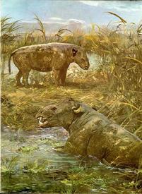 Болотные носороги метаминодоны походили на бегемотов