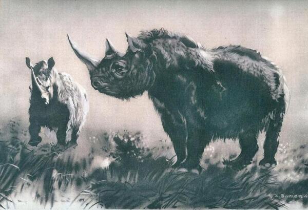 Шерстистого носорога наши предки еще застали
