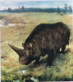 Эласмотерий— доисторический «единорог»