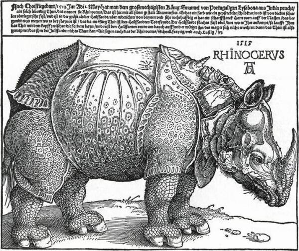 На рисунке (1515 г.) немецкого художника Альбрехта Дюрера носорог будтобы закован в латы. Сам художник носорога не видел и рисовал по описаниям очевидцев