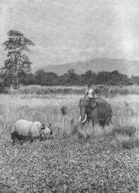 «Мне не страшен серый слон!»