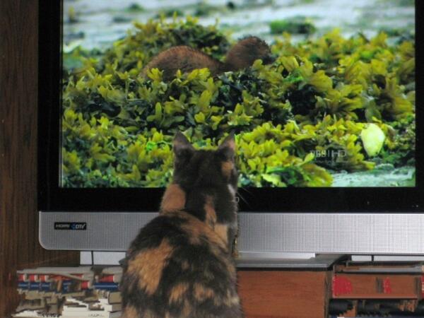 Соня опять «прилипла» к телевизору