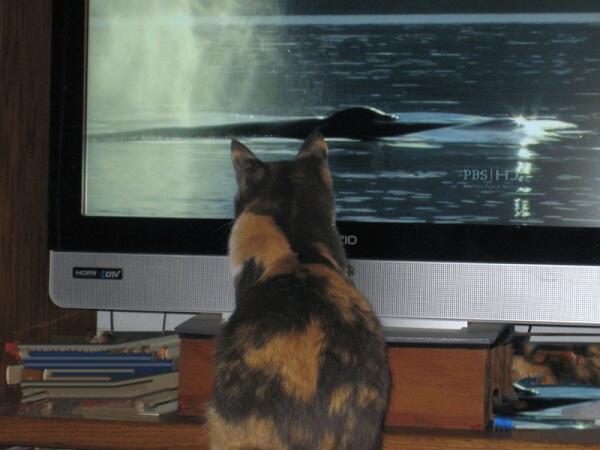 Соня интересуется жизнью морских животных