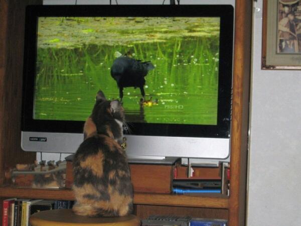 Пожалуй, птицы наиболее интересны для Сони