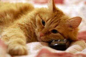 Почему некоторые  кошки любят смотреть телевизор?