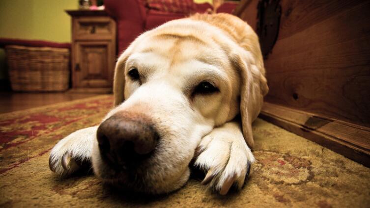 Полезны ли собаки для здоровья?