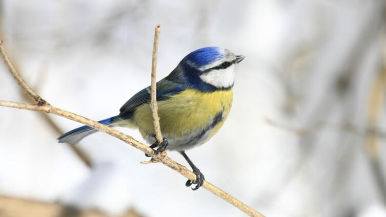 Как помочь птицам пережить холода? Рацион кормления