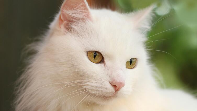 Как быть, когда душа кошачьих требует любви?..
