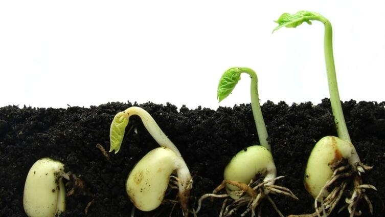 Как определить сроки посева семян овощных культур на рассаду?