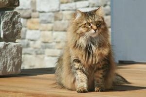 Что делать, если дома завелся кот?
