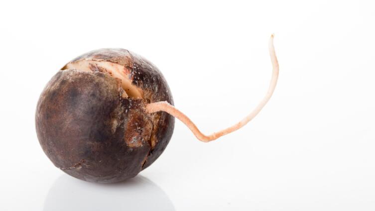 Как вырастить авокадо? История одного деревца