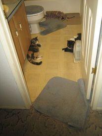 Кошачий порядок прежде всего!