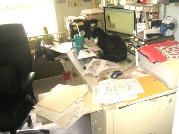 Я помогаю хозяину разобраться с документами