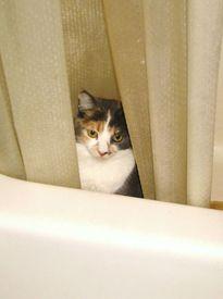 Хорошо иметь свой дом... в ванной
