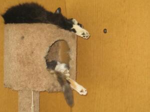 Чем занимаются коты, когда хозяев нет дома?