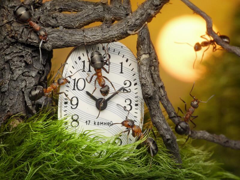 Как сделать часы в лесу