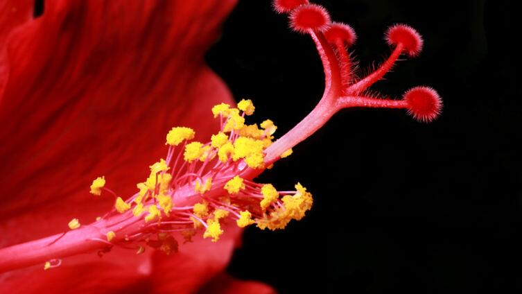 Как расцветали цветы... для меня?