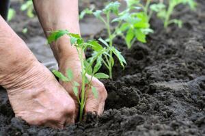 Какую теплицу выбрать для садового участка?