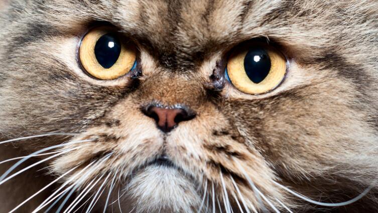 Что пришлось пережить кошкам? Тёмное прошлое домашних любимцев