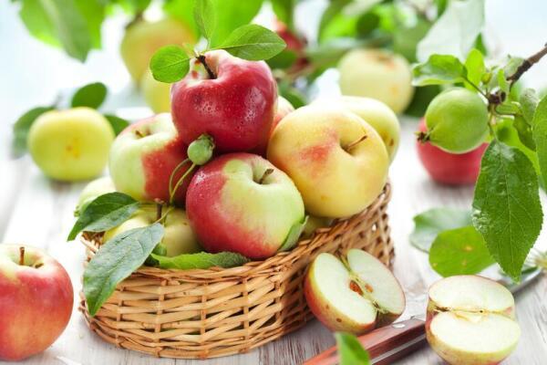Молдавия убеждает Россию, что лучше пустить к себе молдавские яблоки напрямую, а не через Белоруссию